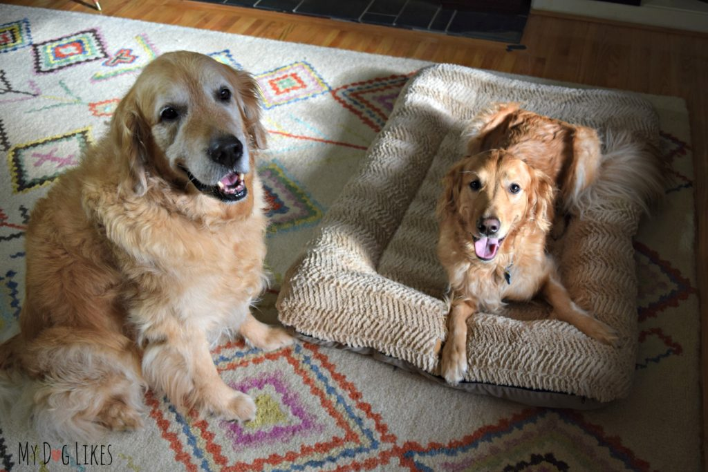 West Paw dog bed reviews from MyDogLikes