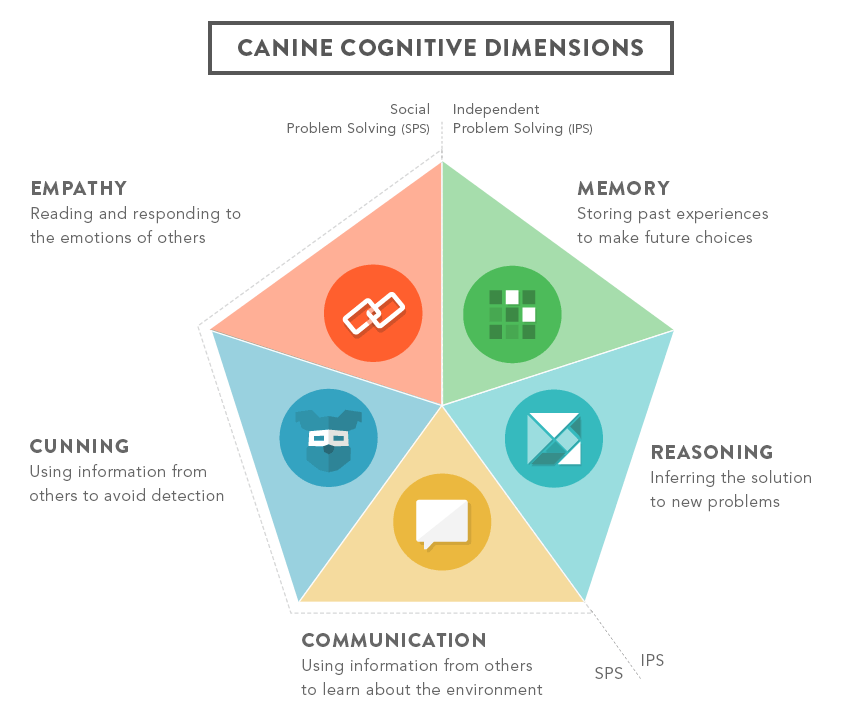 Looking at the 5 different dimensions of Canine Cognition: Empathy, Memory, Cunning, Reasoning, and Communication