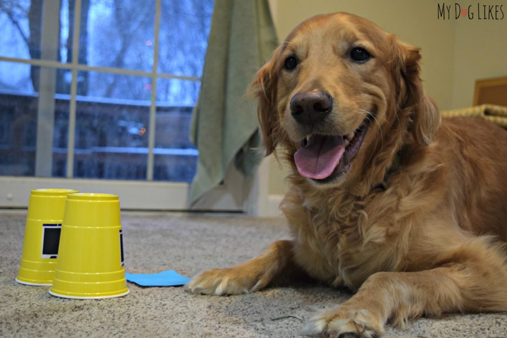 Both we and the dogs had a blast working on the different Dognition games and activities!