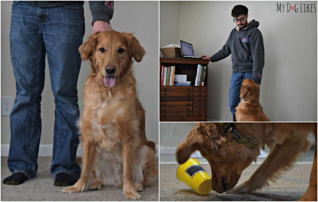 Don't miss this Dognition review from MyDogLikes to see what we thought of the assessment and what we learned about our dogs in the process.