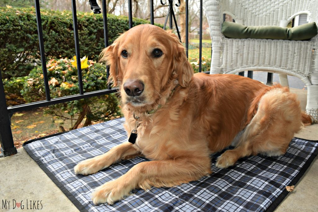 Complete with straps to connect the mat to a table or chair and also keep your dog attached!