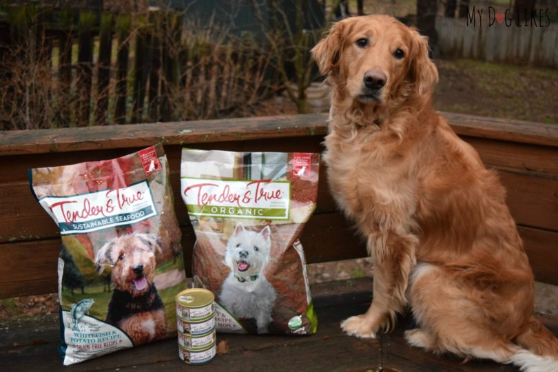 Charlie from MyDogLikes for our Tender and True Dog Food Review