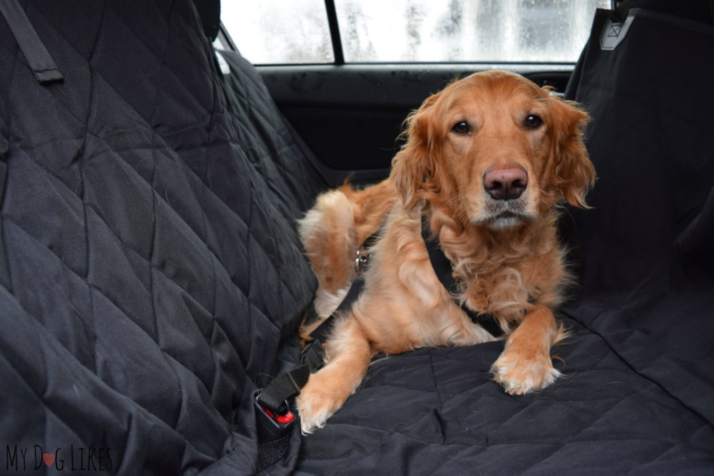 Demonstrating the hammock orientation of the Plush Paws car seat cover.