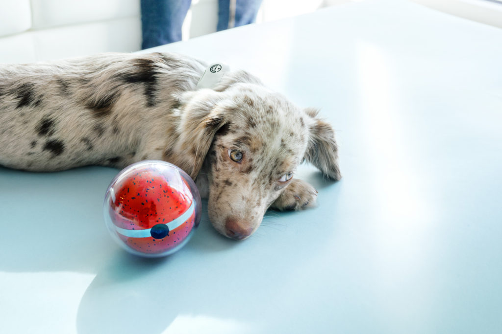 Keep an eye on your pet when you are not at home with the Pebby Robotic Pet Sitter