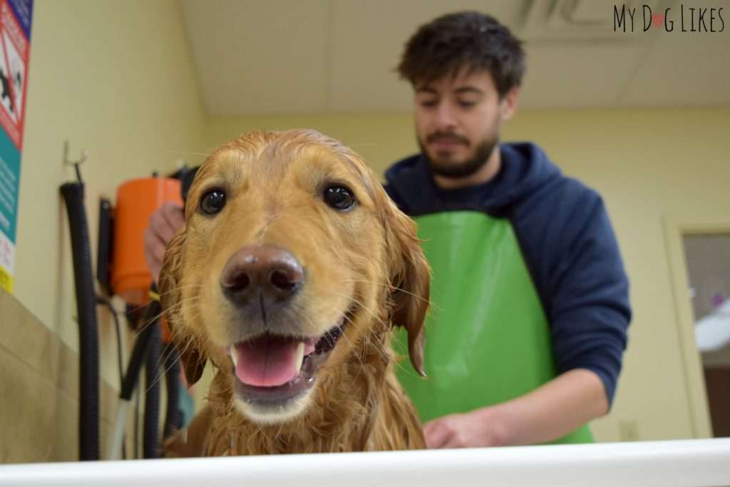 Bathing Charlie at PetSaver Superstore