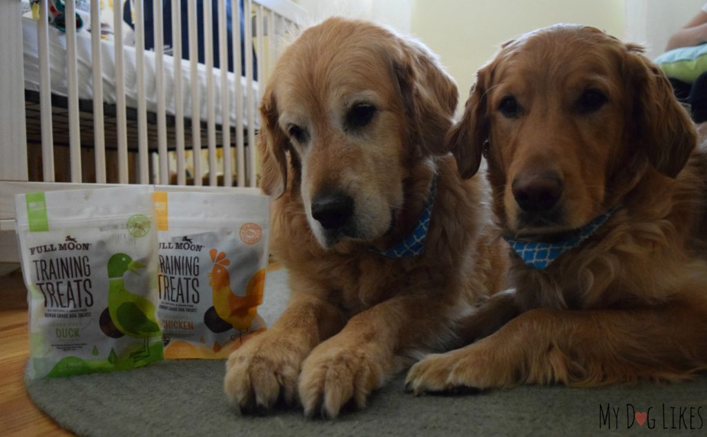 Utilizing dog training treats to help Harley and Charlie get used to the new baby.