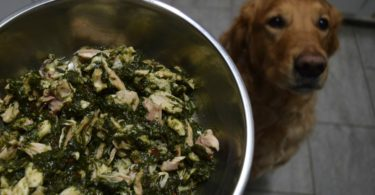 MyDogLikes reviews Dr. Harvey's Paradigm - the perfect base for a keto or low carb dog food diet.