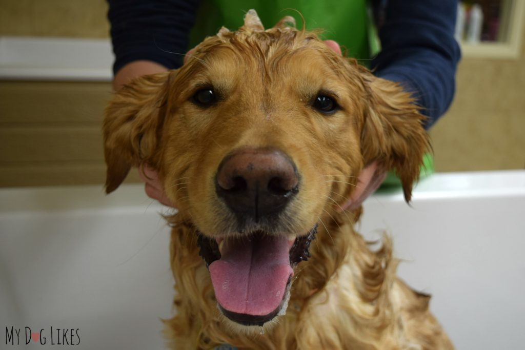 Whoever said that dogs don't enjoy bath time?