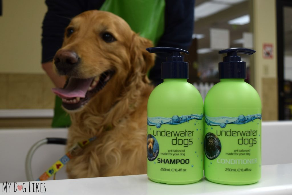 Testing out the shampoo and conditioner from UWDOGS