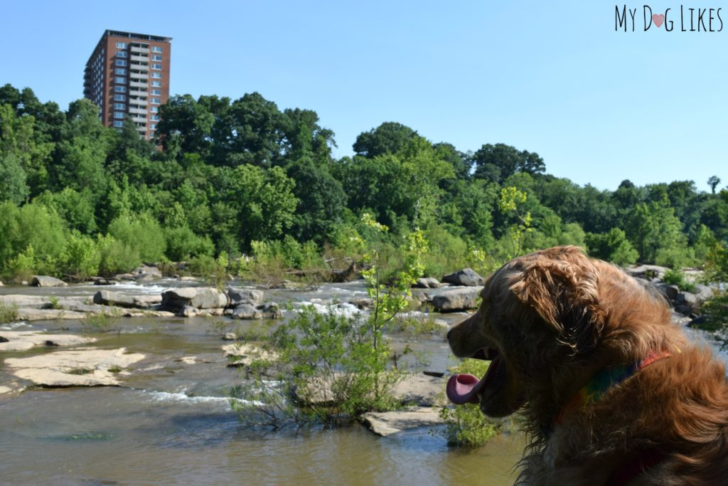 Exploring Belle Isle with dogs