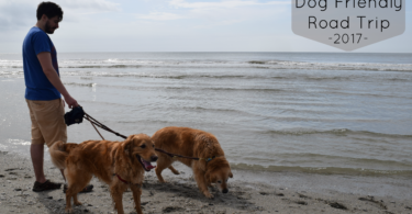 Visiting Myrtle Beach with Dogs