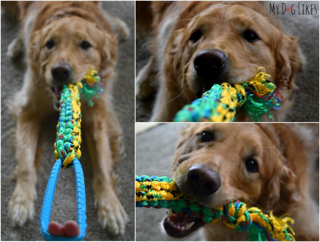 Charlie testing out his new braided rope dog toy with some tug-o-war!