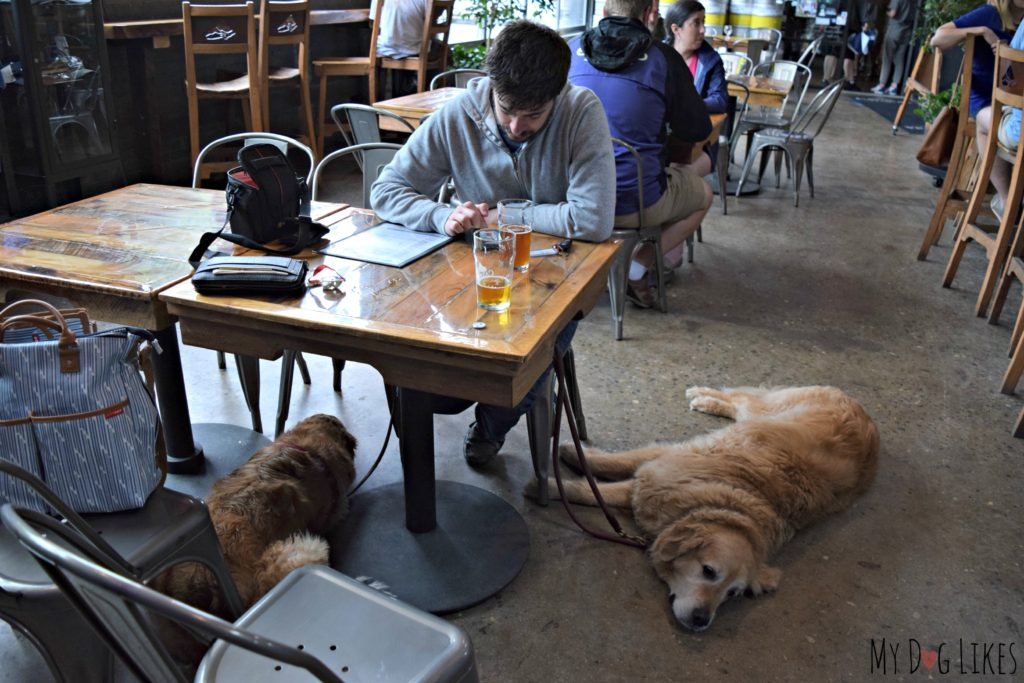 This is a first for us - a brewery where the dogs are allowed inside!