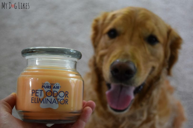 Pet Odor Eliminator Candle from Oreck