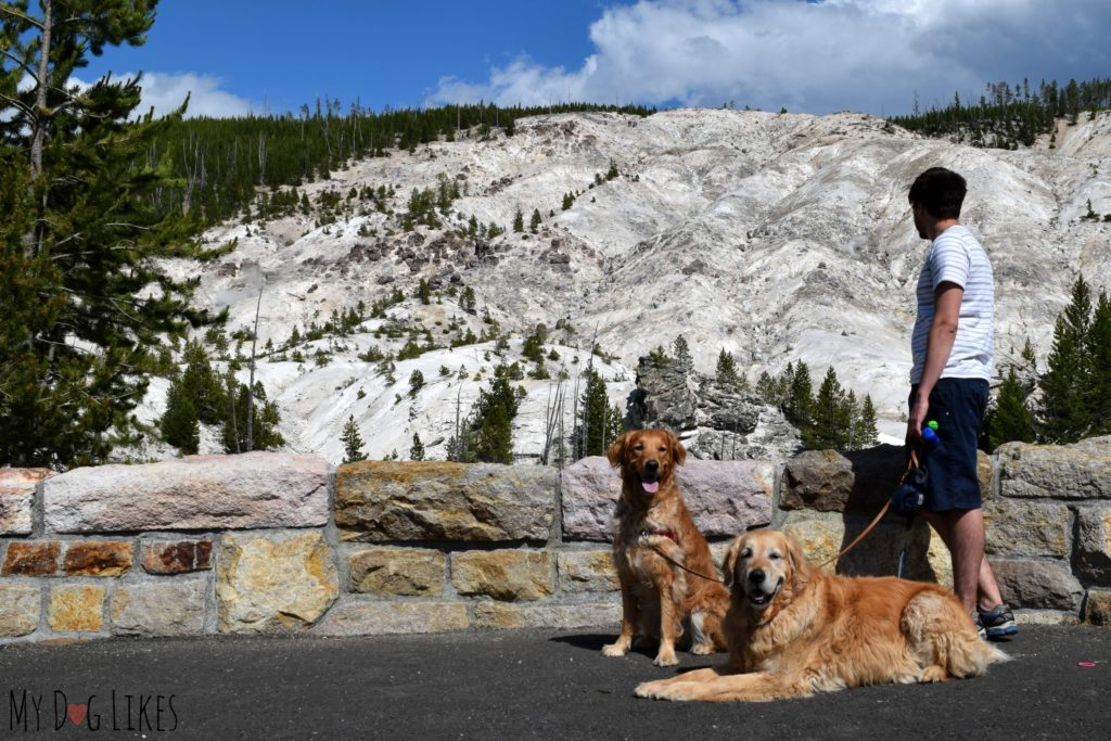 Dogs at Roaring Mountain