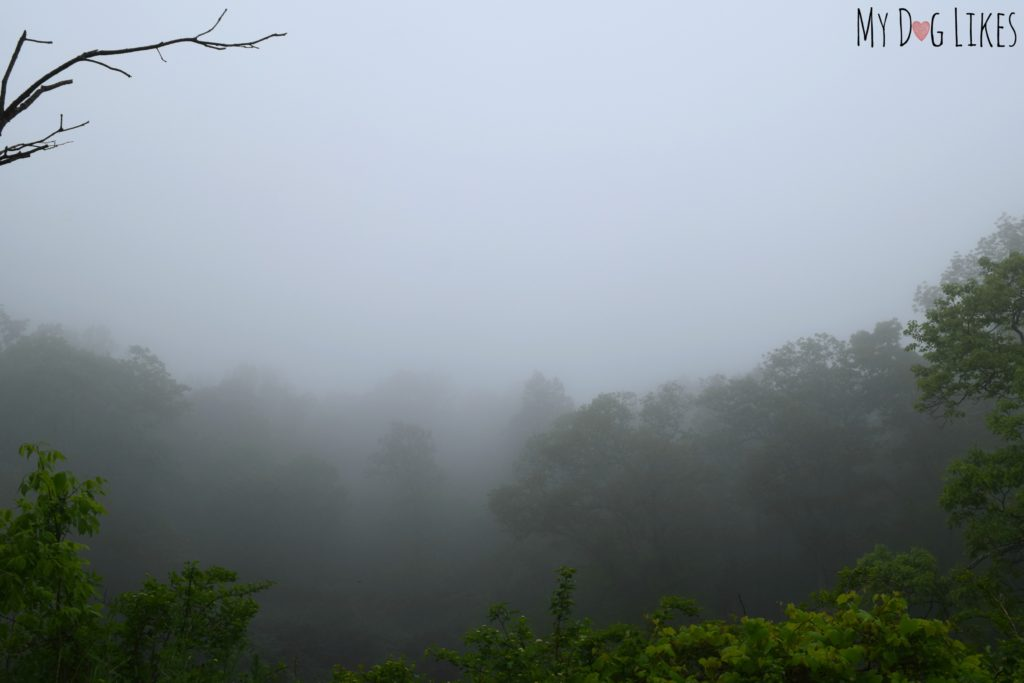 Dense Fog in the Blue Ridge Mountains