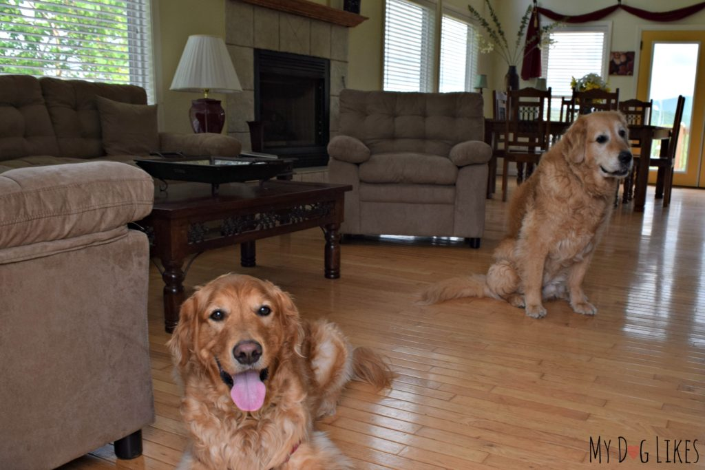 Dog Friendly Rental from Glamping with Pets