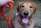 Bright neon dog leash