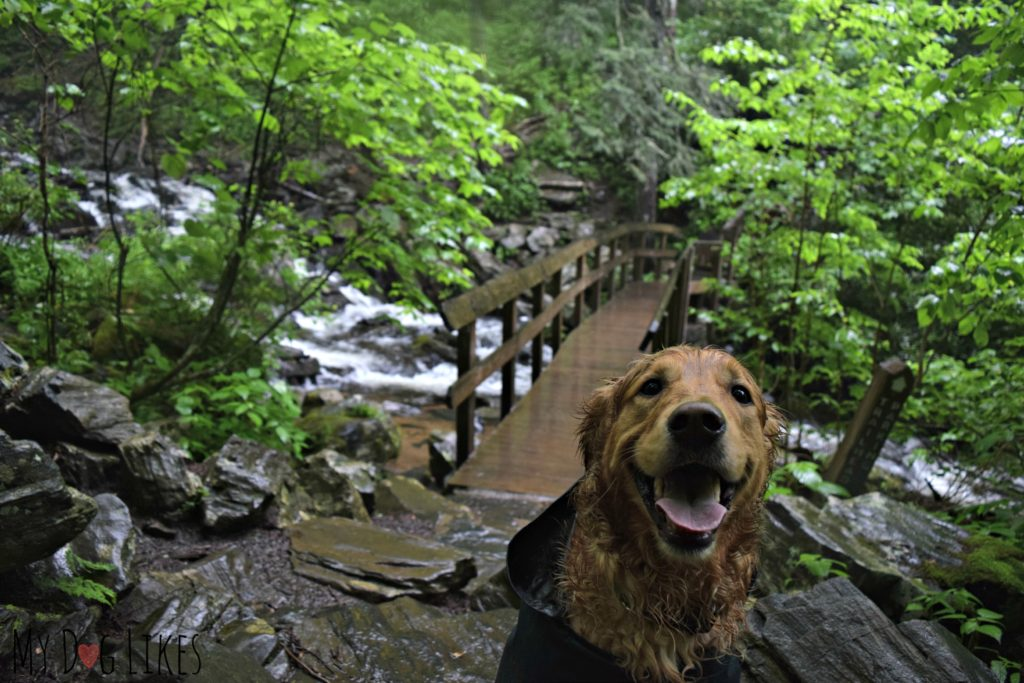 Footbridge at the base of Crabtree Falls