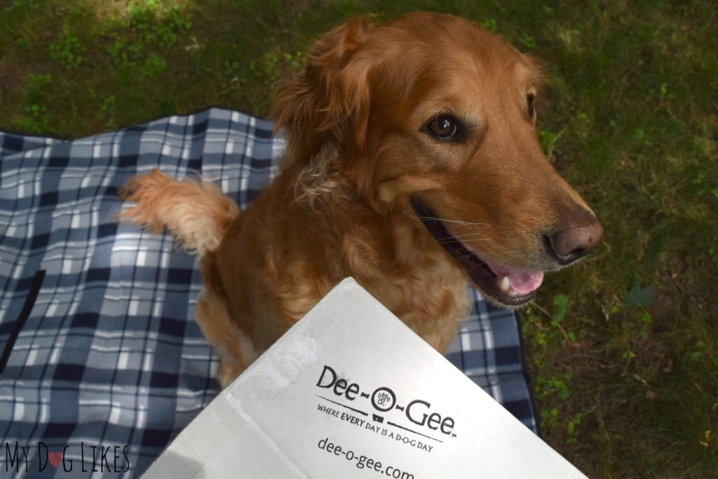 Charlie excited to see what's inside his latest Dee-O-Gee Dog Box!