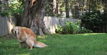 Learn What to do When Your Dog Has Diarrhea in this article from MyDogLikes