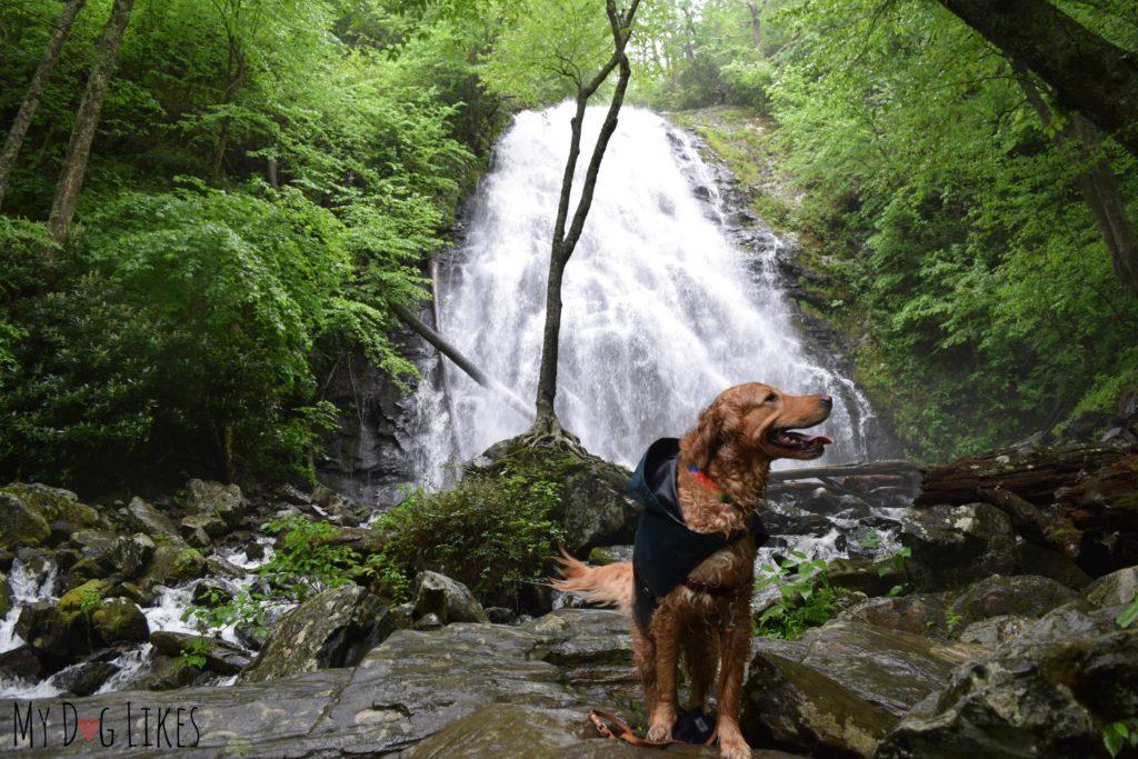 Dog at Crabtree Falls along the Blue Ridge Parkway