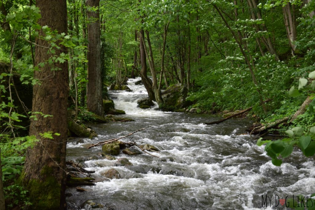Mill Creek was running fast during our visit in late May