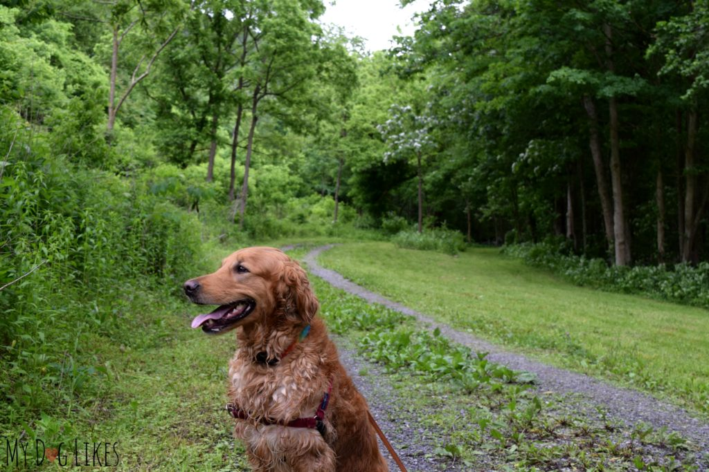 Heading out on the Butternut Trail at Mill Creek Park in Narrows, VA