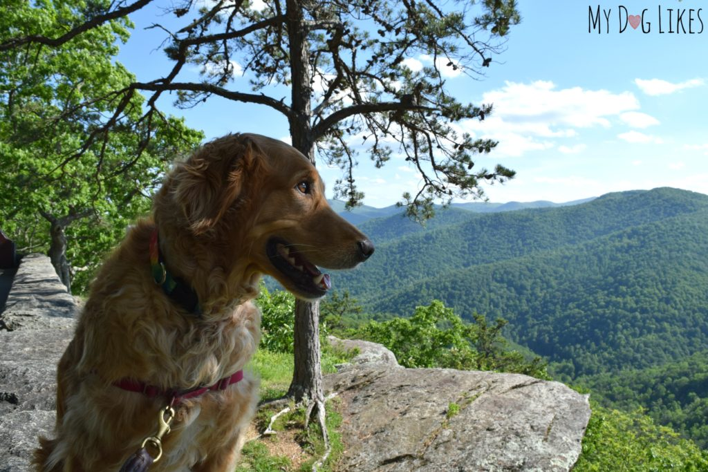 Stopping at an overlook along the Blue Ridge Parkway