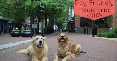 Visiting downtown Charlottesville with Dogs on the last day of our road trip.