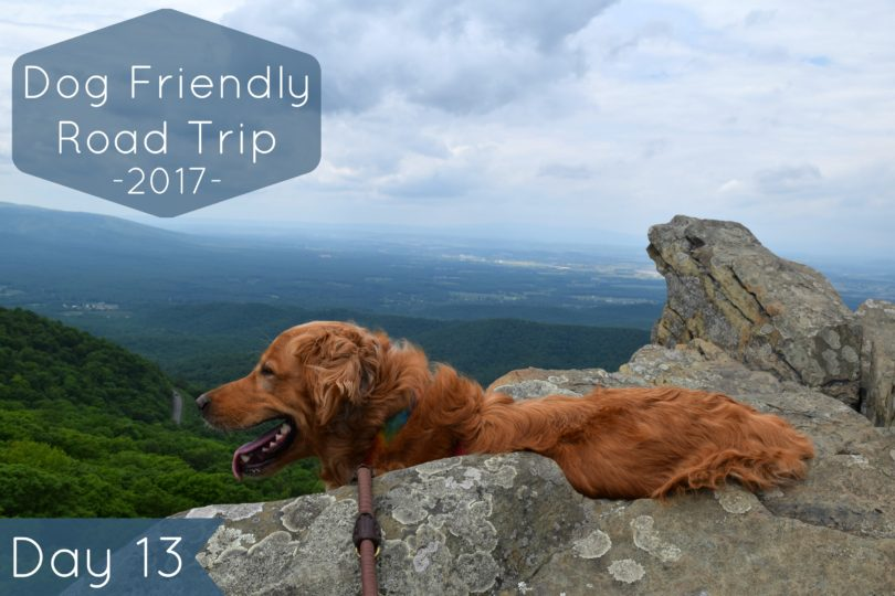 We spent day 13 of our #MyDogLikesAmerica hiking at Humpback Rocks near Charlottesville, VA