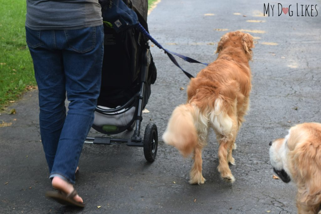 Showing our dog the way the stroller (pram) moves and turns