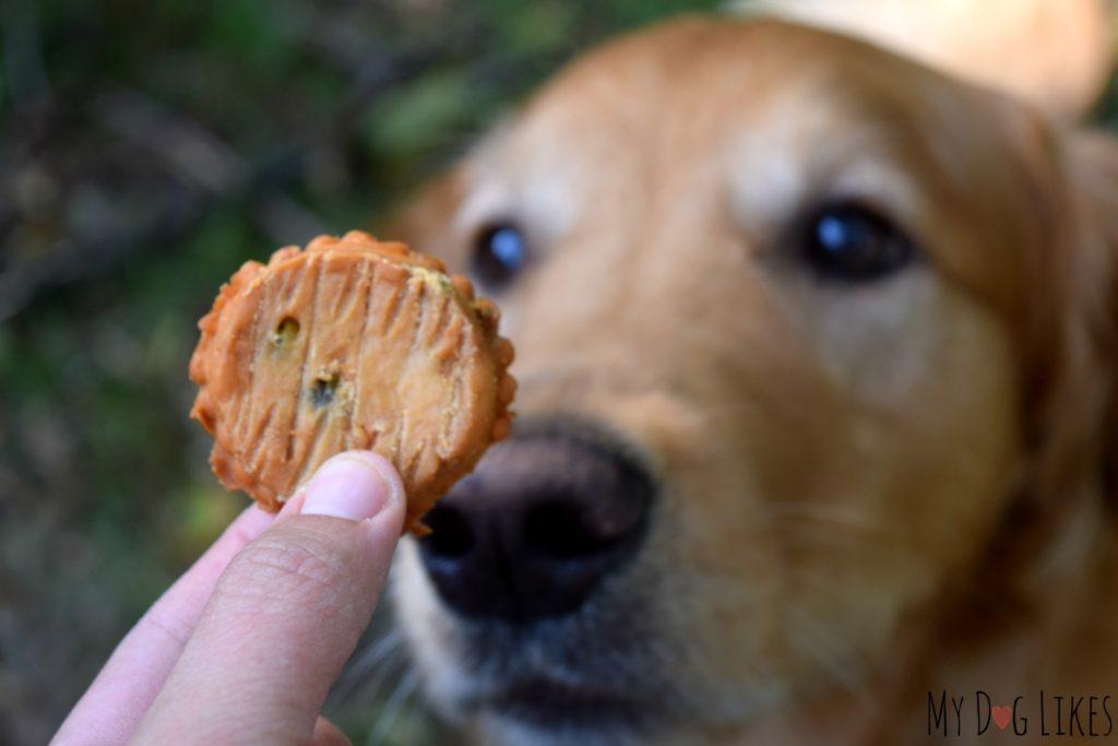 Rewarding good behavior with training treats