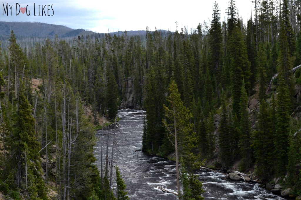 River and forest in Wyoming