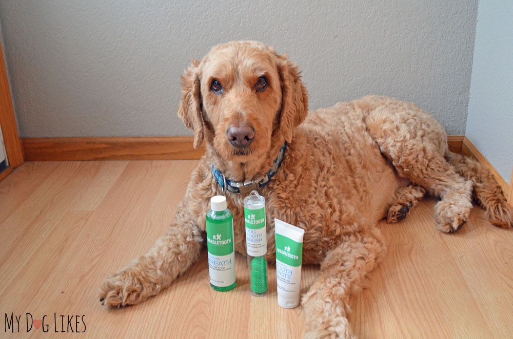 Spencer posing with the full line of Waggletooth products