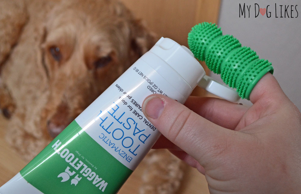 Demonstrating use of the Waggletooth dog toothbrush and toothpaste