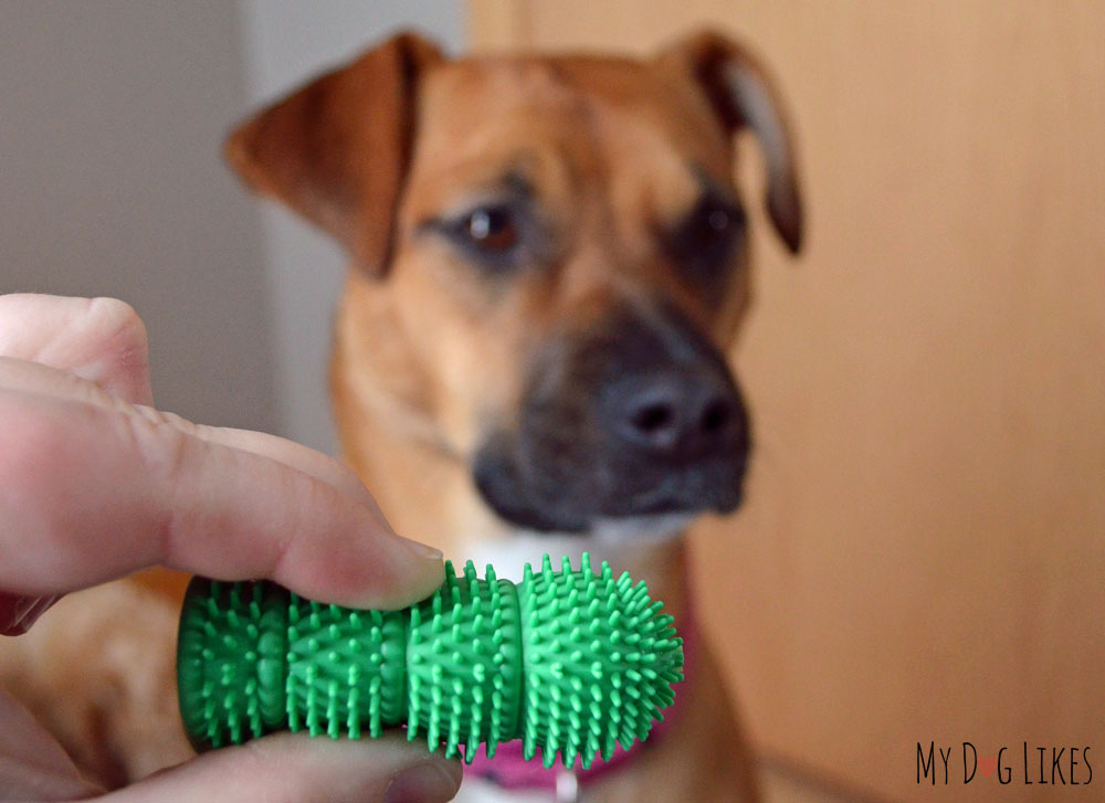 Waggletooth Finger Dog Toothbrush Review