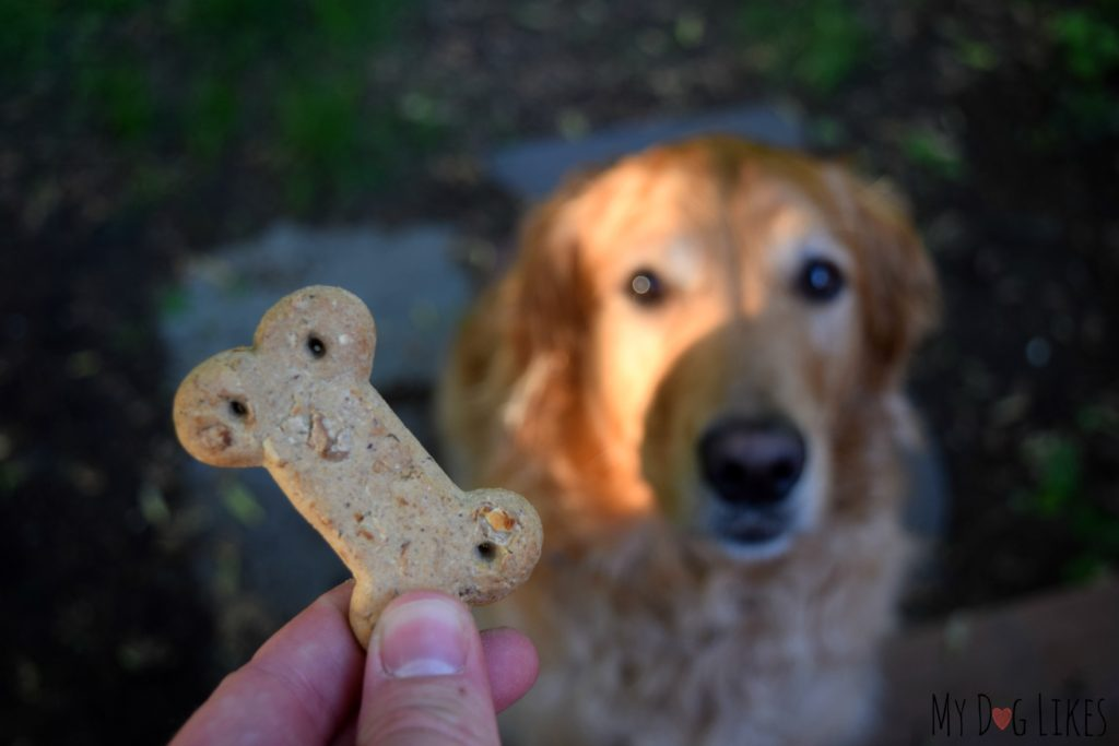 """Waiting """"patiently"""" for a Vita Bone biscuit!"""