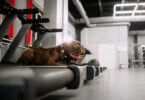 Can a dog use a regular treadmill