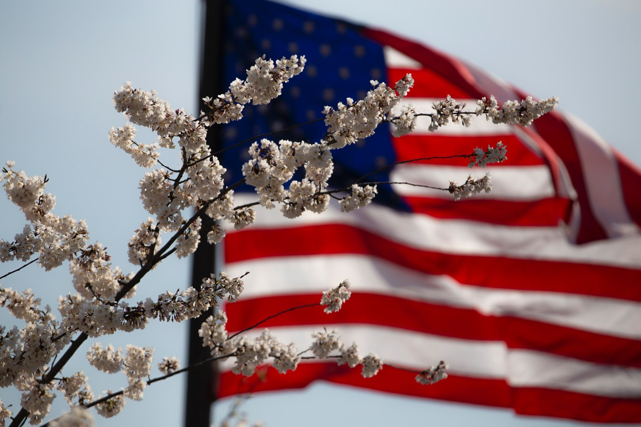 For Memorial Day, the flag flown with a flowing tree