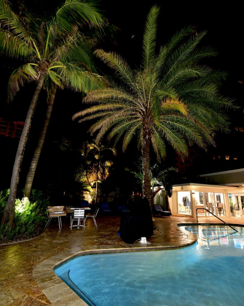The pool at night with palm trees