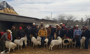 Entregan ovinos sementales de calidad genética superior