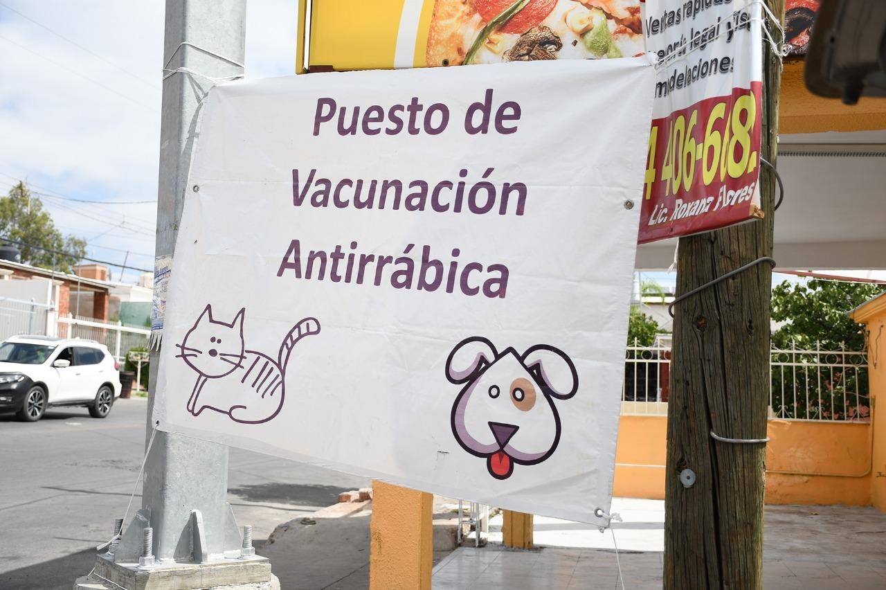 Da a conocer Secretaría de Salud nuevos puntos de vacunación antirrábica