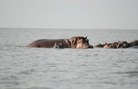 places-to-visit-in-kenya-hippo-point-1024x685