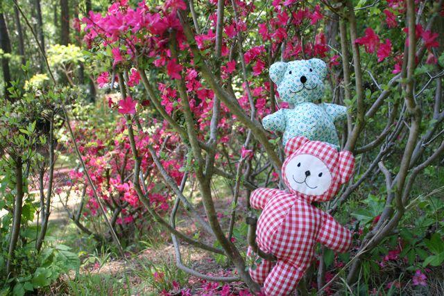 teddy bear splash image