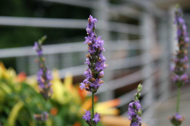 lavender spike   whipstitch