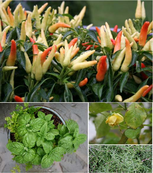 summer garden | whipstitch