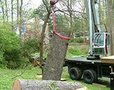 Crane Picking Up Huge Tree Branch