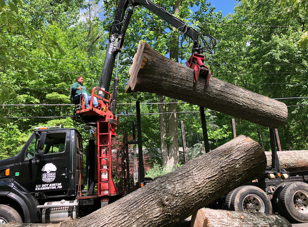 Lifting a heavy large tree branch