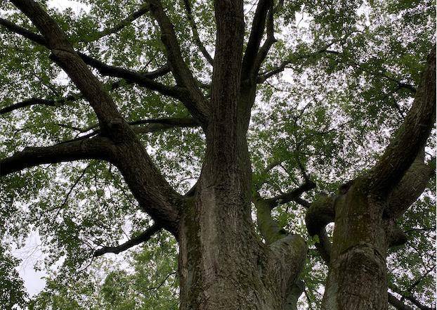 Tree Services - Arborist Consulting Image